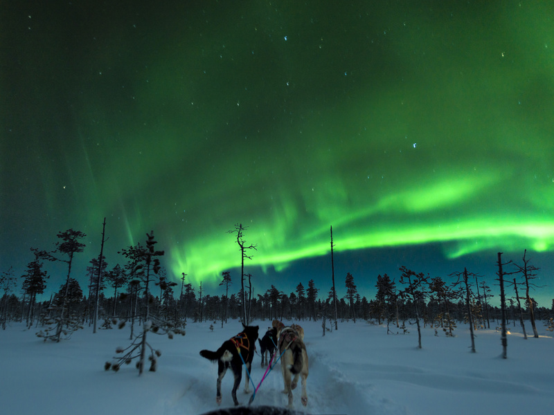 Aurora Dog Sledding - Astrophotography