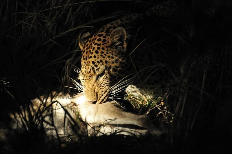 - Wildlife