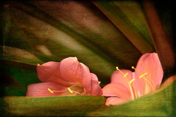 - Floral Art...