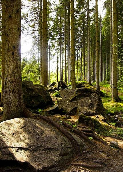 - Treebeards Herd...