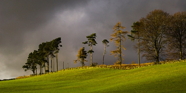 - Treebeards Herd.....