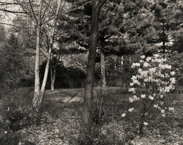 Arboretum, Pennsylvania, #1, 1984 - The Garden Series