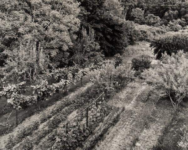 George's Garden, Pennsylvania, #3, 1984 - The Garden Series