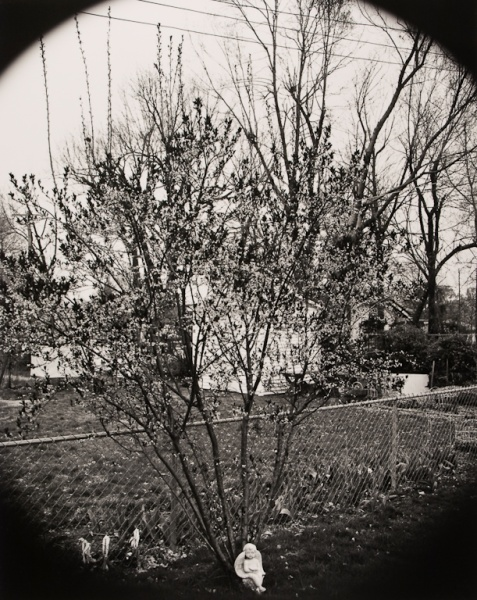 My Back Yard, Missouri, 1994 - The Garden Series