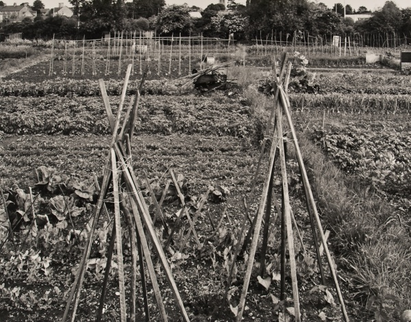 Allotments, Oxfordshire, #1, 1986 - The Garden Series
