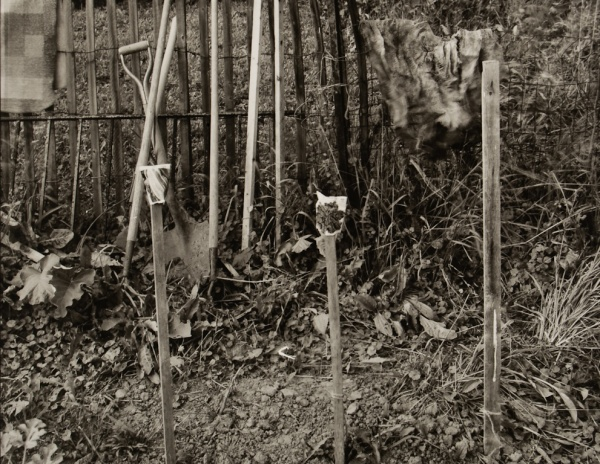 George's Garden, New York, #1, 1983 - The Garden Series