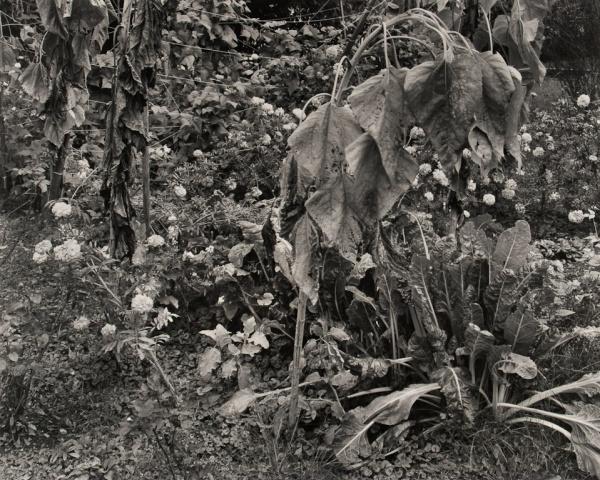 My Garden, Pennsylvania, 1984 - The Garden Series