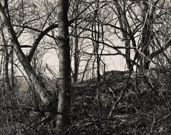 Arboretum, Pennsylvania, #5, 1985 - The Garden Series