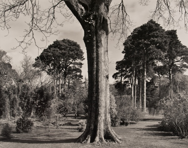 Arboretum, Ireland, #1, 1985 - The Garden Series