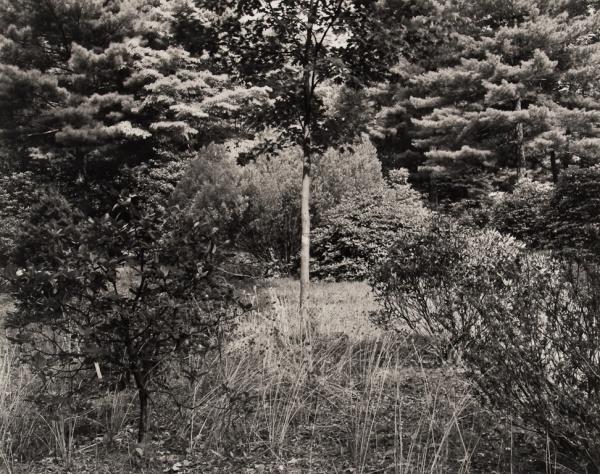 Arboretum, Pennsylvania, #6, 1985 - The Garden Series