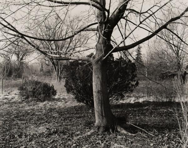 Maple, Pennsylvania, 1983 - The Garden Series