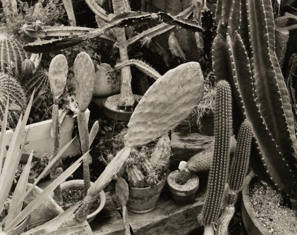 Cacti in Greenhouse, Pennsylvania, 1983 - The Garden Series