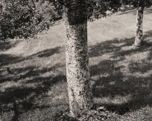 Orchard, Pennsylvania, #1, 1992 - The Garden Series