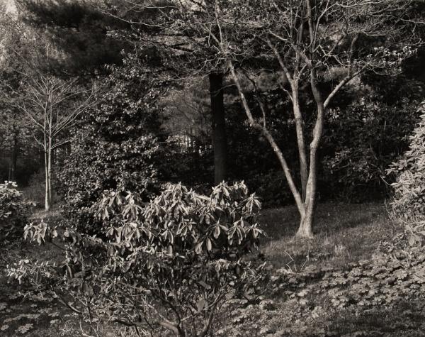 Arboretum, Pennsylvania, #3, 1984 - The Garden Series