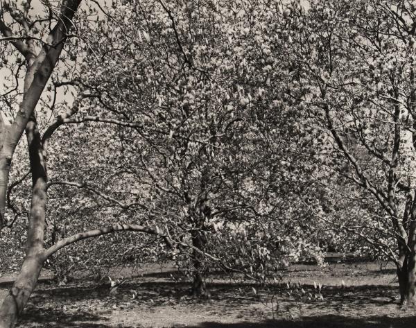 Arboretum, Pennsylvania, #4, 1984 - The Garden Series