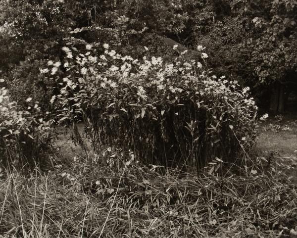 George's Garden, New York, #2, 1983 - The Garden Series