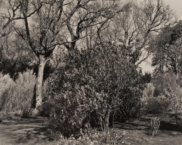 Arboretum, Ireland, # 2, 1985 - The Garden Series