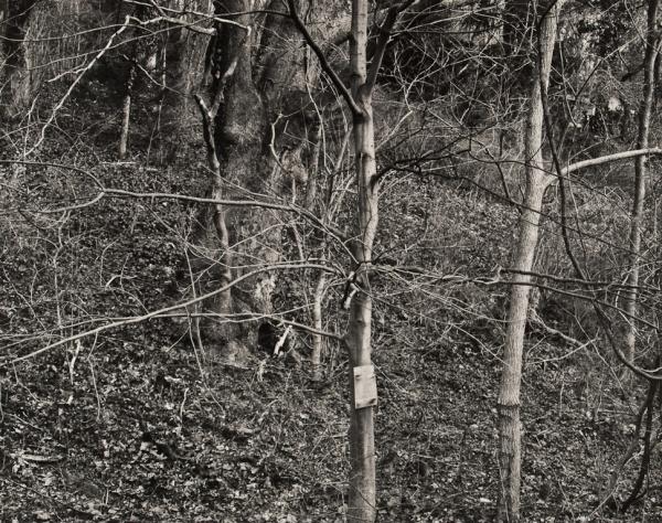 Trees, Church Road, Pennsylvania, 1984 - The Garden Series