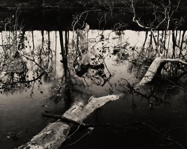 Fallen Sycamore, Missouri, 1990 - Landscapes