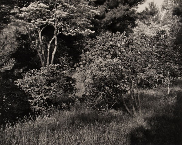Arboretum, Pennsylvania, #2, 1984 - The Garden Series