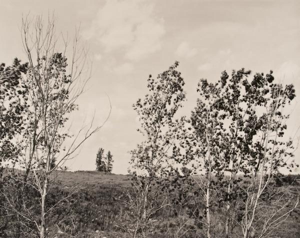 Trees on Hillside, Kansas, 1989 - Landscapes