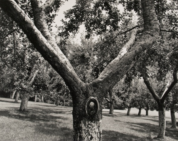 Orchard, Pennsylvania, #2, 1992 - The Garden Series