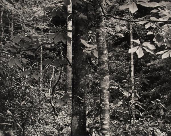 Forest, North Carolina, #1, 1991 - Landscapes