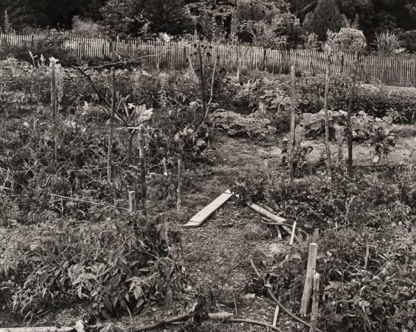 Vegetable Garden, Pennsylvania, 1984 - The Garden Series