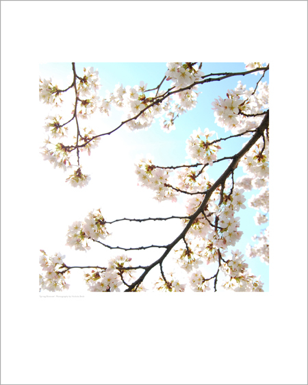 Spring Blossom - Open Edition Prints
