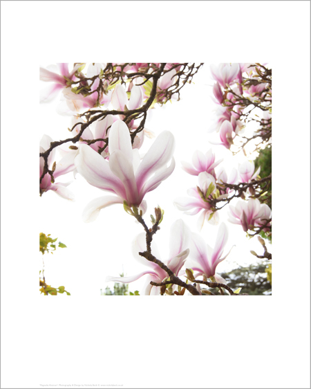Magnolia Abstract - Open Edition Prints