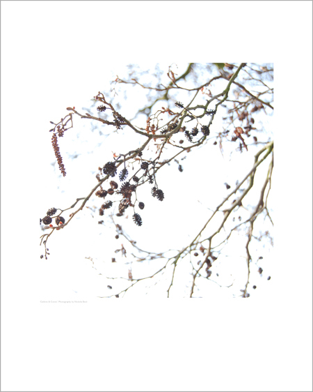 Catkins & Cones - Open Edition Prints
