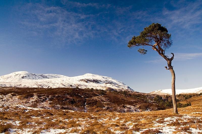 The Twisted Tree-Glen Lyon - Inland Scotland