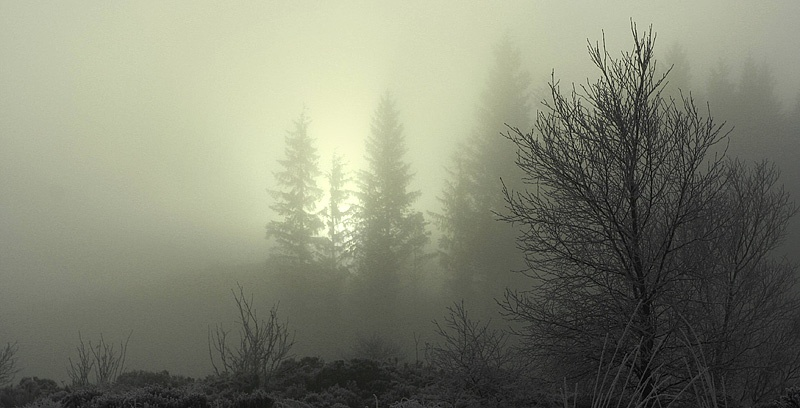 Low Visibility-Achray Forest - Inland Scotland