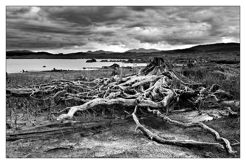 Nature's Ruins - Monochrome Images