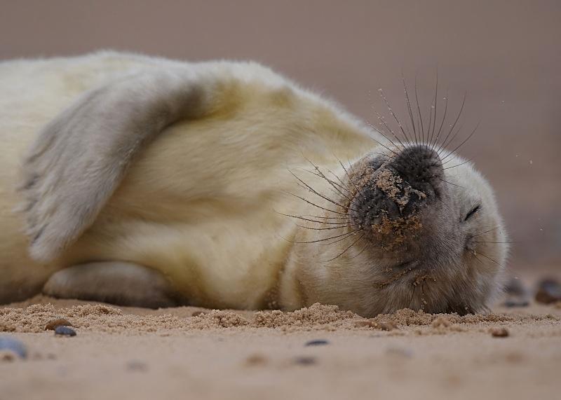 6 - Grey Seal