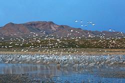 South Crane Pond at dawn, Bosque del Apache, New Mexico