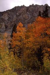 Fall Colors: The Eastern Side portfolio