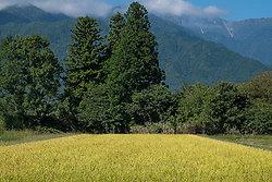 Autumn Rice portfolio