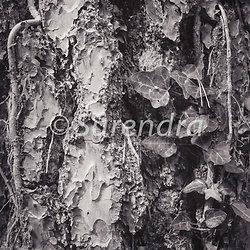 Bark Series 1 樹皮 portfolio