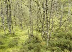 Plants and woodlands portfolio