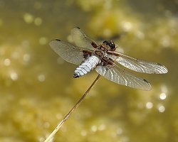 Insects, Dragon Flies, Bugs and Plants portfolio