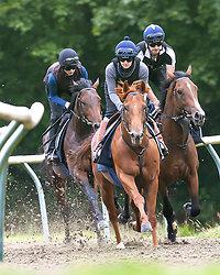 Newmarket. Horses in Training portfolio