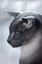 Animals portfolio