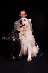 German Shepherd Show, 26th October '13 portfolio