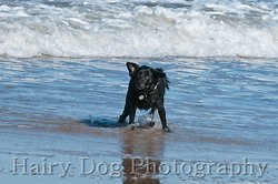 Amy's Dogs, Tynemouth Beach portfolio