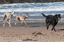Amy's Dogs, Tynemouth Beach portfolio