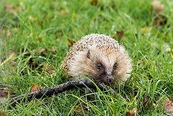 British Wildlife Centre portfolio