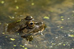Amphibians portfolio