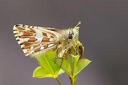 Vercors Butterflies portfolio