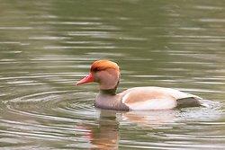 Attenborough Nature Reserve portfolio